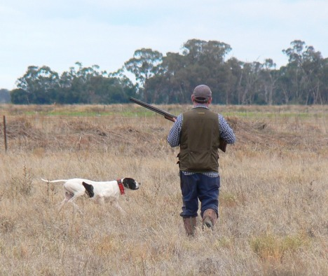 Black and white Pointer with handler Joe