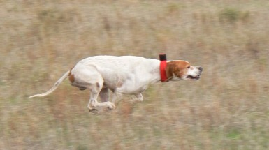 Pointer in flight