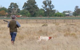 Pointer working the field
